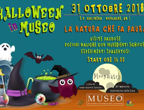 HALLOWEEN in Museo